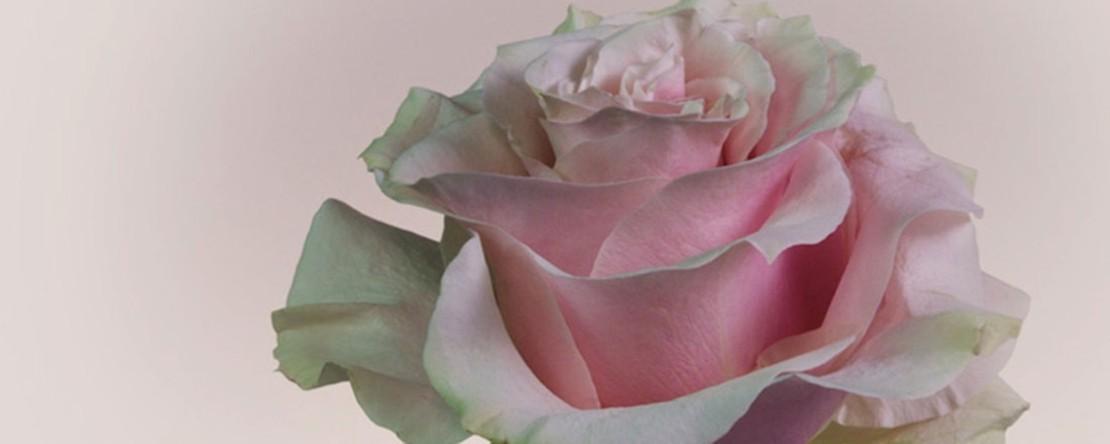Münzserie Mit der Sprache der Blumen